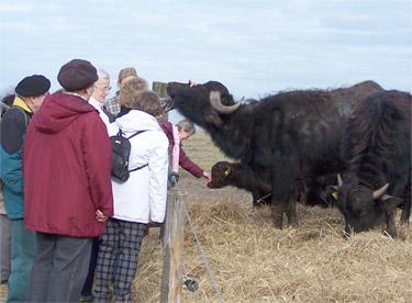 Besuch einer Wandertruppe auf unserer Farm